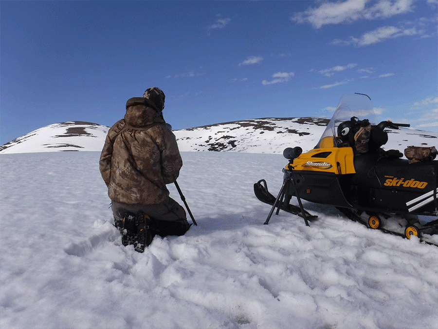 Hunting grizzly bear with Arctic North Guides.