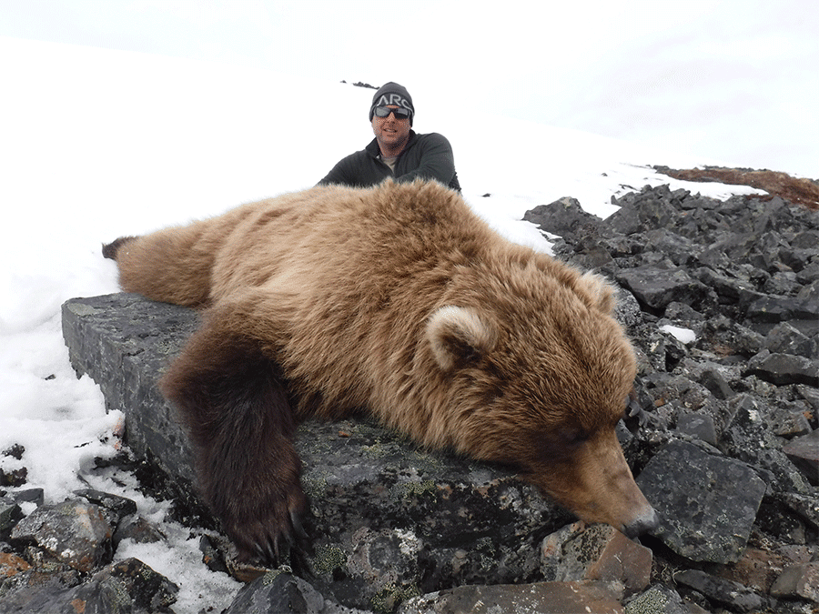 Grizzly hunt - Arctic North Guides.